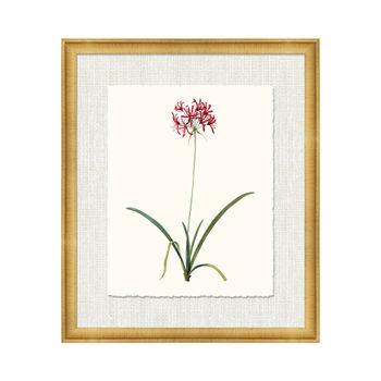 Petite Botanica Xiii