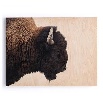 "American Bison-Maple Box 60""X40"""