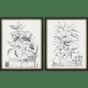 Botanicals Ii, Set Of 2