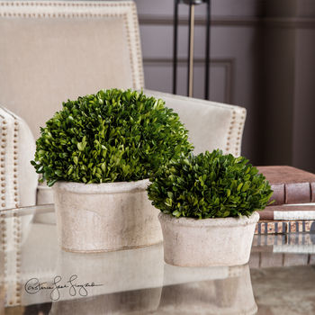 Oval Domes Preserved Boxwood Set/2